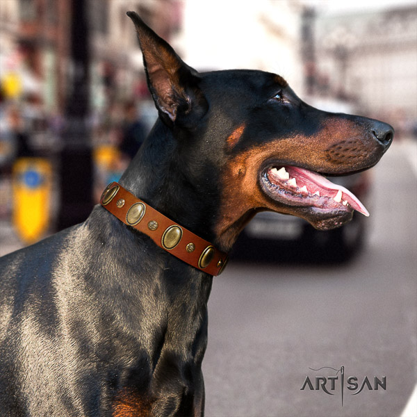 Doberman comfortable wearing full grain genuine leather dog collar with decorations