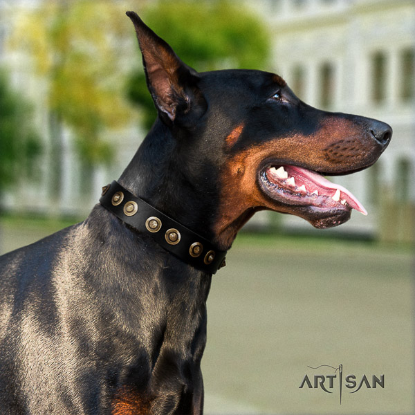 Doberman basic training natural genuine leather dog collar with studs