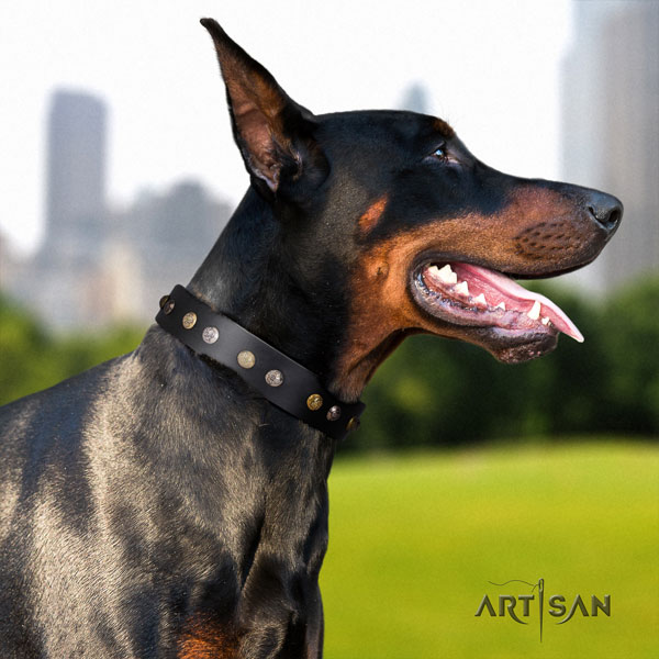 Doberman incredible full grain genuine leather collar with adornments for your canine