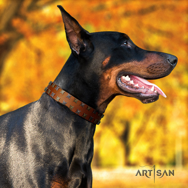 Doberman comfy wearing leather dog collar with decorations