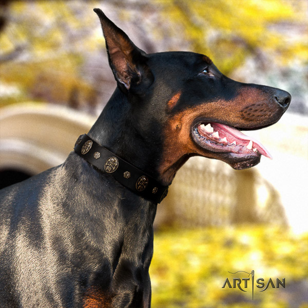 Doberman walking natural genuine leather dog collar with studs