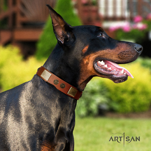 Doberman handy use full grain natural leather dog collar with embellishments