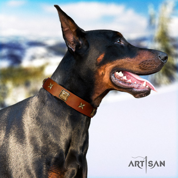 Doberman basic training full grain leather dog collar with decorations