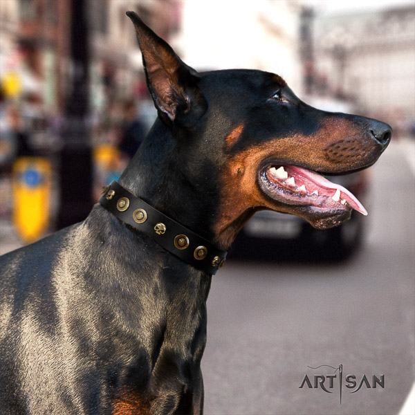Doberman daily walking full grain genuine leather dog collar with embellishments