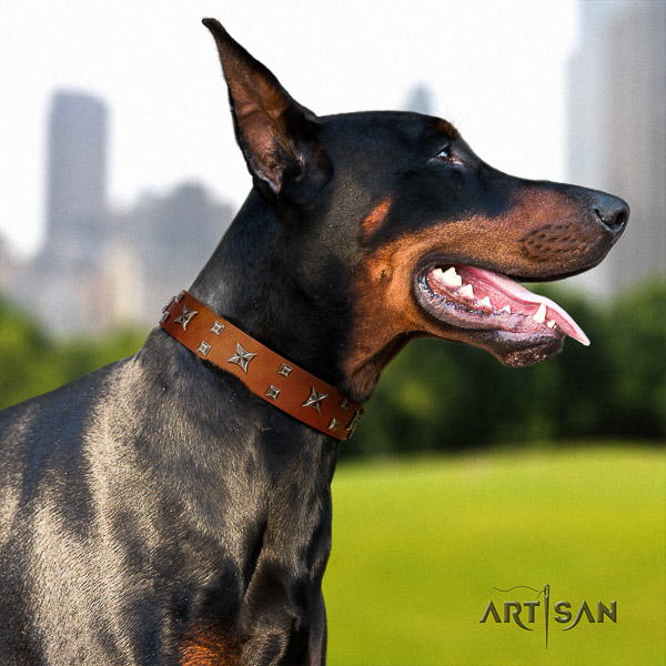 Doberman full grain leather dog collar with decorations for daily use