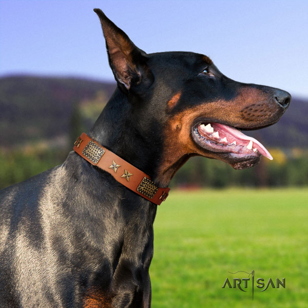 Doberman perfect fit full grain leather collar with adornments for your dog
