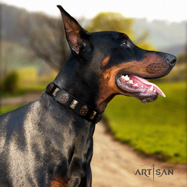 Doberman comfy wearing natural genuine leather dog collar with decorations