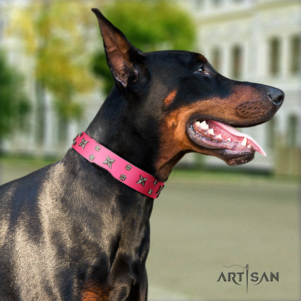 Doberman full grain leather dog collar with studs for everyday walking