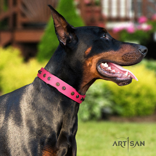 Doberman designer genuine leather collar with studs for your doggie