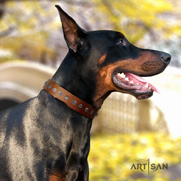 Doberman natural genuine leather dog collar with adornments for your handsome canine