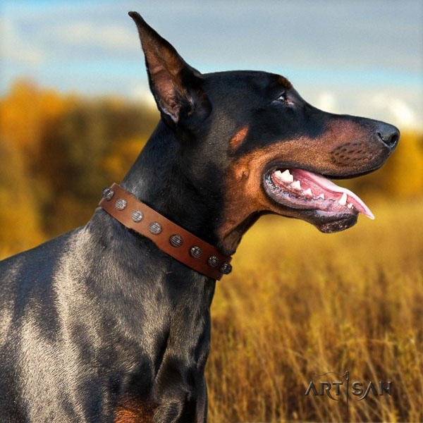 Doberman leather dog collar with adornments for your impressive pet