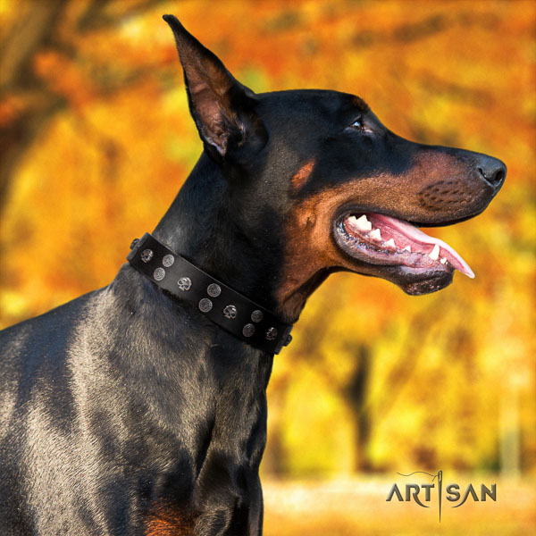 Doberman leather dog collar with embellishments for your handsome pet