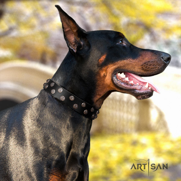 Doberman full grain natural leather dog collar with adornments for your stylish four-legged friend