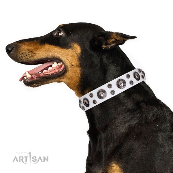 Doberman incredible full grain natural leather dog collar for everyday walking