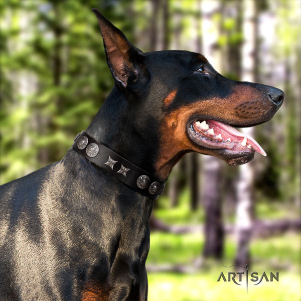 Doberman genuine leather dog collar with adornments for your impressive dog