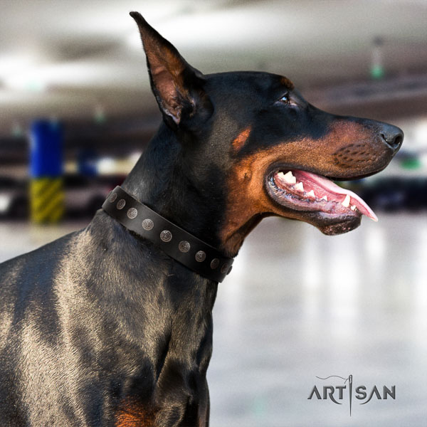 Doberman full grain genuine leather dog collar with embellishments for your handsome canine