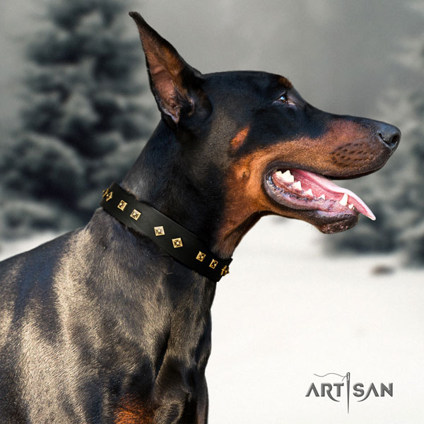 Doberman awesome full grain genuine leather collar with embellishments for your canine