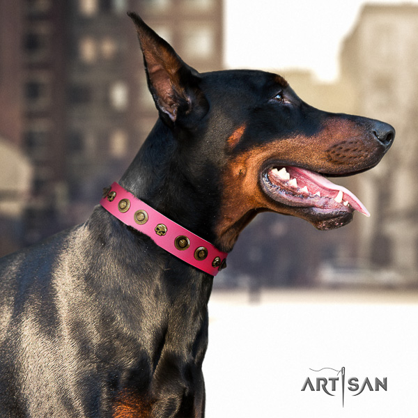 Doberman everyday use genuine leather dog collar with adornments
