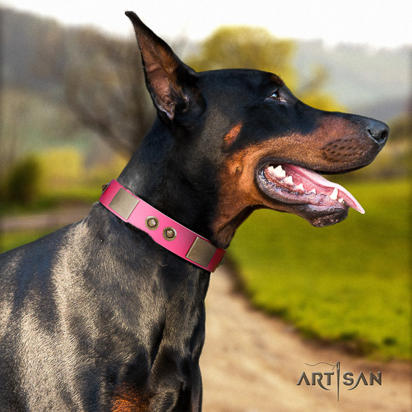 Doberman daily walking full grain leather dog collar with studs