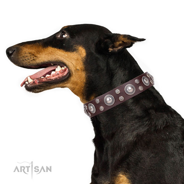 Doberman comfortable full grain leather dog collar for everyday walking