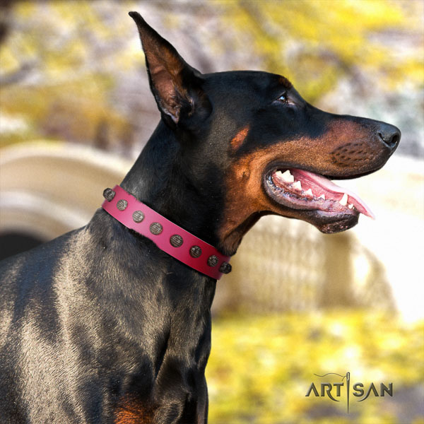 Doberman full grain leather dog collar with adornments for your handsome four-legged friend