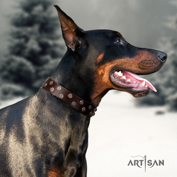 Doberman full grain genuine leather dog collar with embellishments for your attractive canine