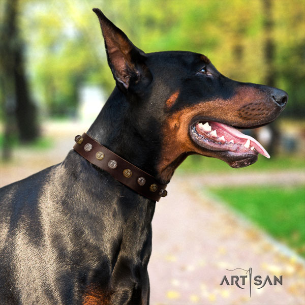 Doberman genuine leather dog collar with adornments for your handsome doggie