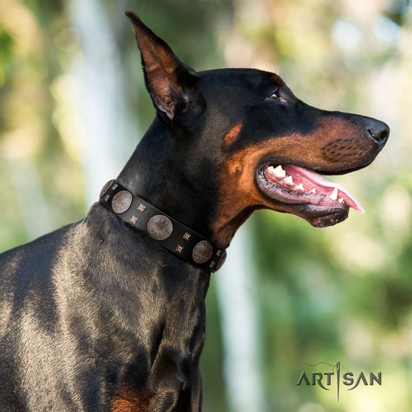 Doberman full grain genuine leather dog collar with adornments for your handsome four-legged friend