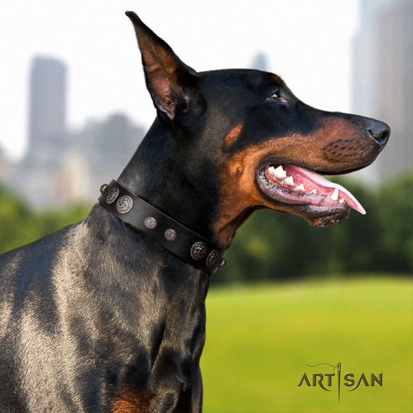 Doberman full grain genuine leather dog collar with adornments for your impressive pet