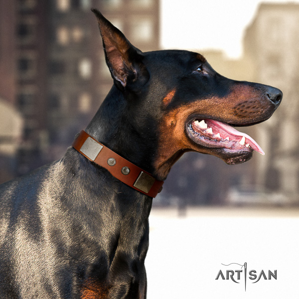 Doberman comfy wearing genuine leather dog collar with studs