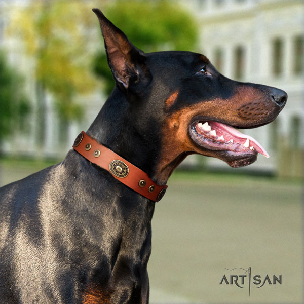 Doberman incredible natural genuine leather collar with adornments for your four-legged friend