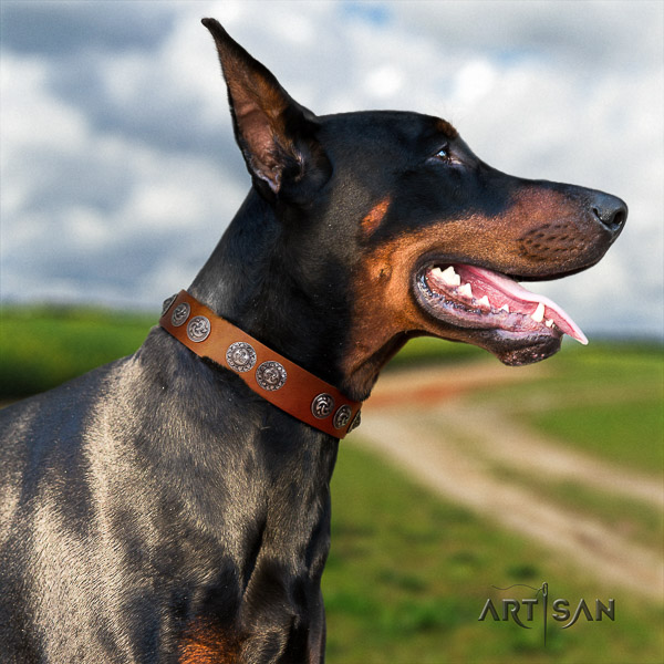 Doberman full grain leather dog collar with decorations for everyday walking