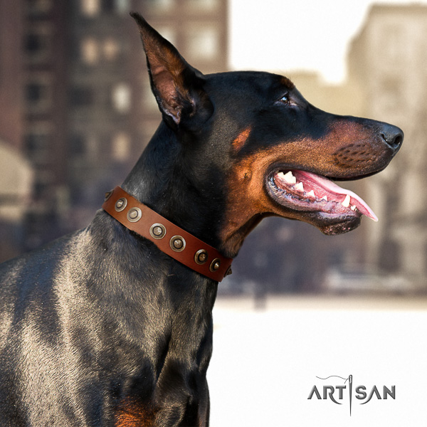 Doberman comfortable wearing leather dog collar with embellishments