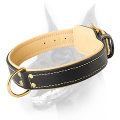 Handmade leather dog collar for Dobermans