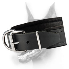 Everyday dog collar for Dobermans