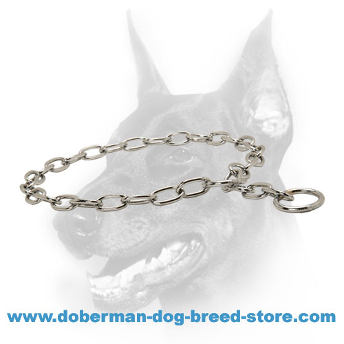 Doberman breed fur saver collar of chrome-plated steel