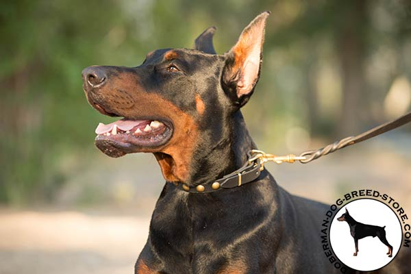 Doberman black leather collar with corrosion resistant hardware for daily activity