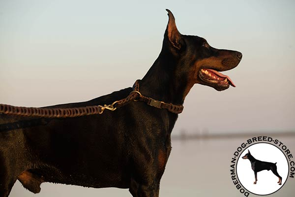 Doberman brown leather collar with durable fittings for walking
