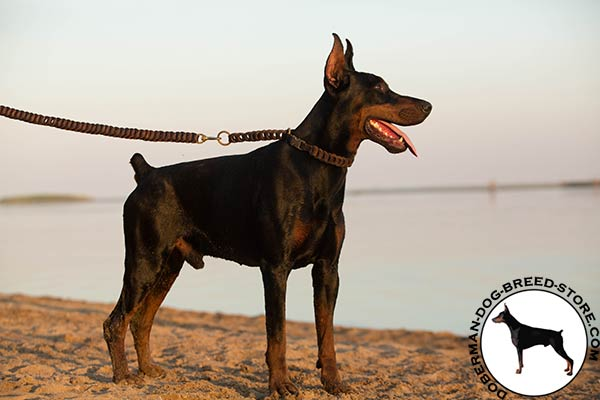 Doberman brown leather collar with strong hardware for better comfort