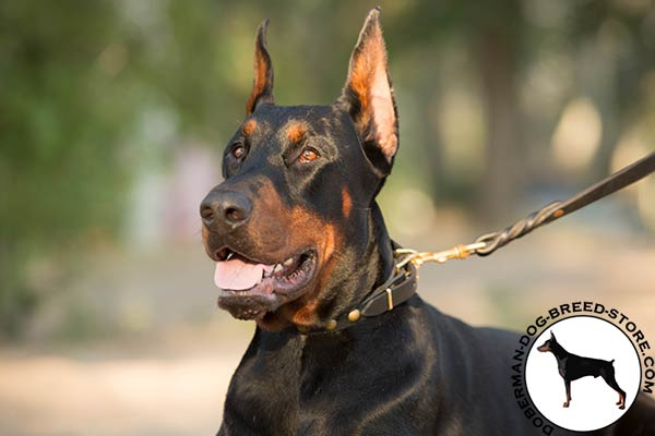 Doberman black leather collar with reliable hardware for any activity