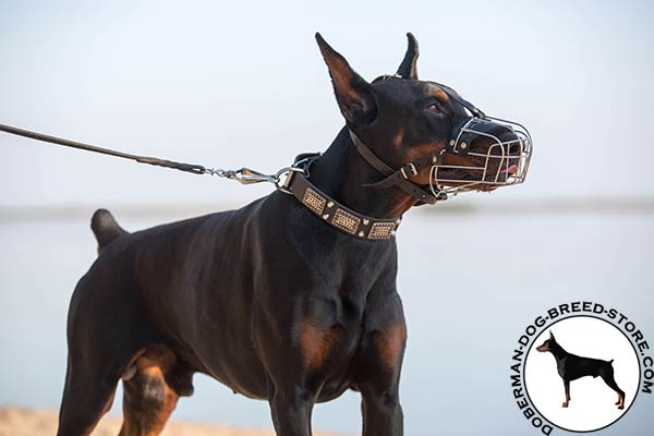 Doberman black leather collar of genuine materials with traditional buckle for professional use
