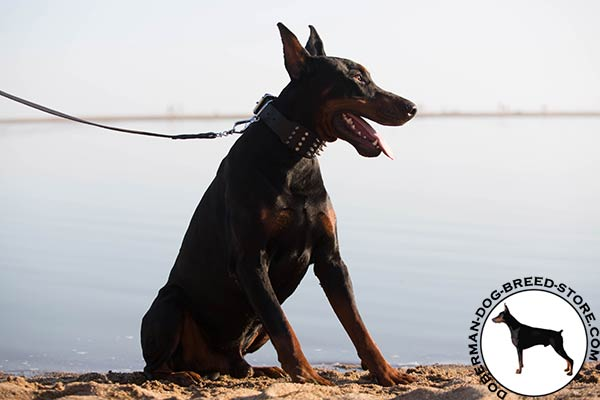 Doberman black leather collar with reliable fittings for daily walks