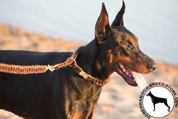 Doberman brown leather collar of lightweight material with quick release buckle for professional use