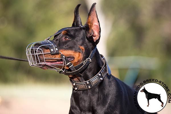 Doberman black leather collar with rustless hardware for daily activity