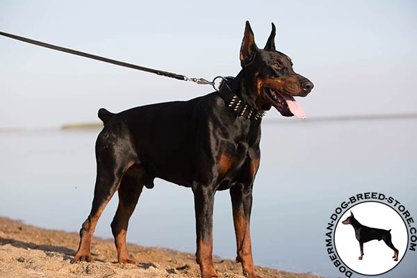 Doberman brown leather collar with reliable hardware for daily activity