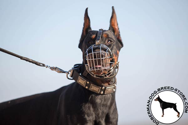 Doberman black leather collar with strong fittings for better comfort