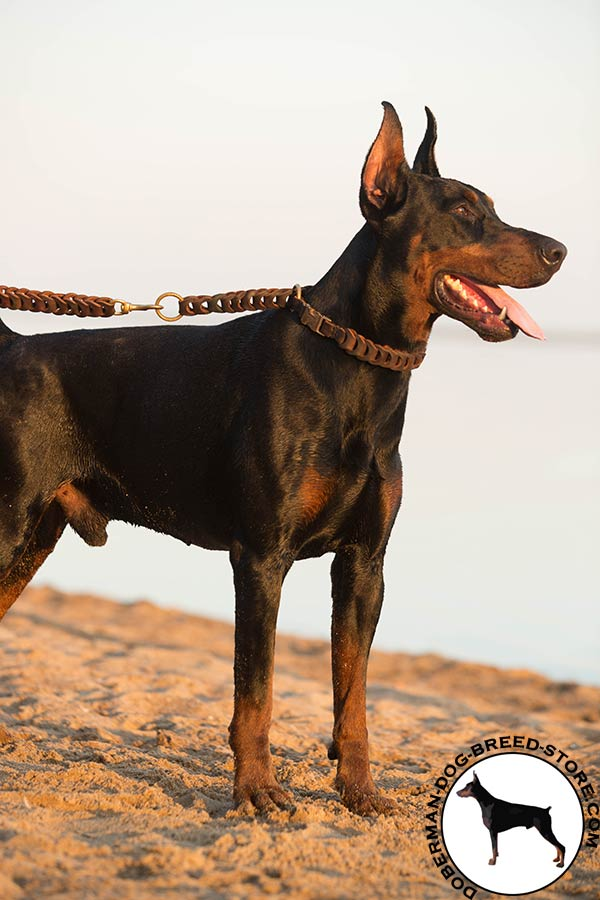 Doberman brown leather collar with rust-resistant quick release buckle for any activity