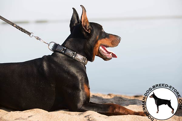 Doberman black leather collar with non-corrosive fittings for perfect control