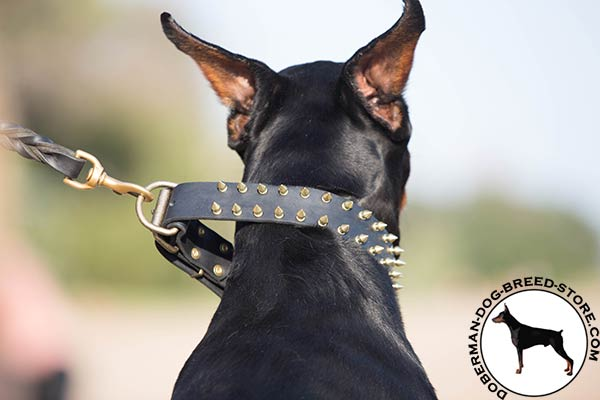 Doberman black leather collar with rust-free hardware for pulling activity