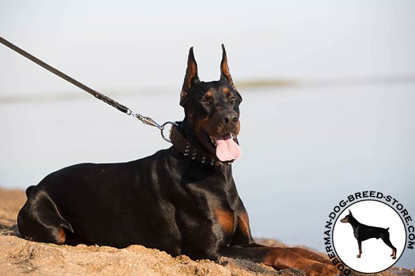 Doberman brown leather collar of classic design with d-ring for leash attachment for pulling activity
